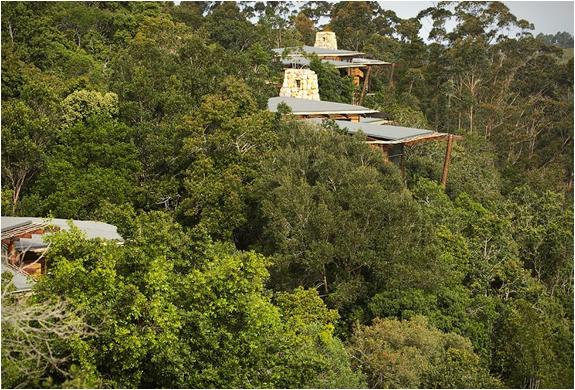 tsala-treetop-lodge-13.jpg