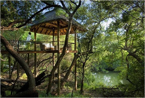 tsala-treetop-lodge-9.jpg