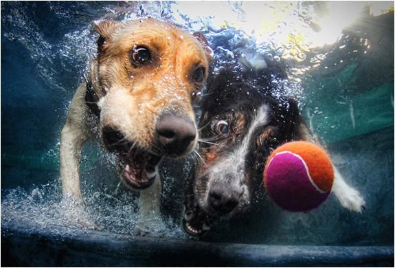 underwater-dogs-seth-casteel-3.jpg | Image
