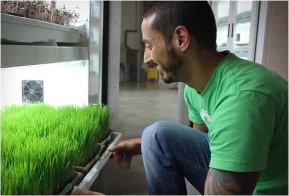 urban-cultivator-5.jpg | Image