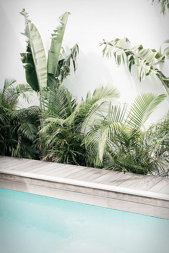 villa-palmier-15.jpg