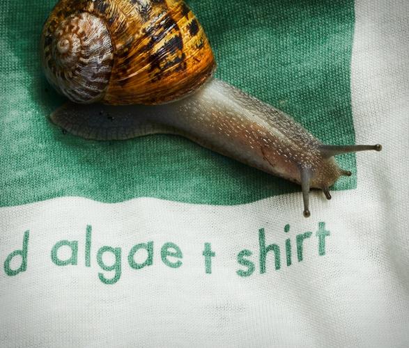 vollebak-plant-and-algae-t-shirt-4.jpg | Image
